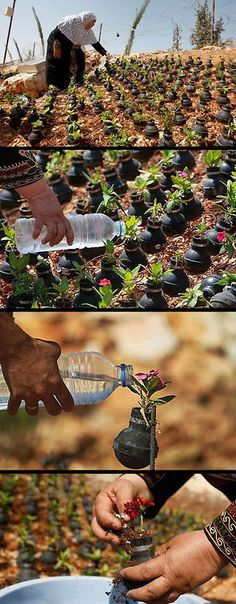 Palestine woman collects gas bombs fired by the Israelis and puts plants in them. Beautiful, but sad :(