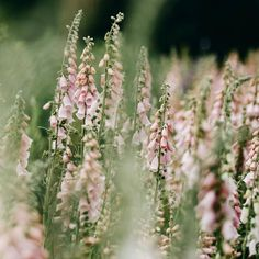 We are so looking forward to foxglove season 🌸 have already seen some sprouting in the hedgerows of Cornwall 🌸 image Pink Garden, All Nature, Back Gardens, Gardening For Beginners, Garden Inspiration, Organic Gardening, Flower Power, Wild Flowers, Planting Flowers