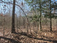 Approximately 4.35 wooded acres.