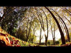 Happy Autumn the start of  beautiful golden and rainy days. Some Vivaldi (four season-autumn) to start this season with...