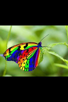 Mariposa   Butterfly - #arco iris #rainbow