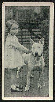 Bull terrier and little girl, around 1960s.