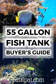 55 Gallon Fish Tank Guide – Here's What You Need! 55 Gallon Tank, 55 Gallon Aquarium, Aquarium Fish Tank, Aquarium Stand, Animals For Kids, Animals And Pets, Baby Animals, Aquarium Design, Aquarium Ideas