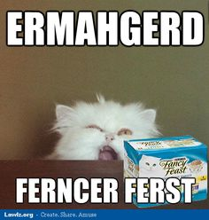 lol-cat-meme-ermahgerd-ferncer-ferst-fancy-feast-food.png (495×521)