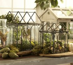 Wardian Cases Wire Terrariums | Pottery Barn