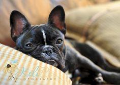 Lucy, my French Bulldog <3