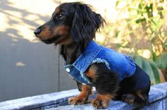 Denim Dog Jacket Vest Distressed Sleeveless by PabloandCoBoutique