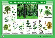 Grass, Flora, Earth, Landscape, Plants, Image, Herb Box, Scenery, Grasses