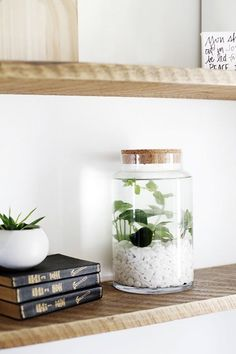 DIY Indoor Water Garden // Such a lovely and simple water garden using a nice…