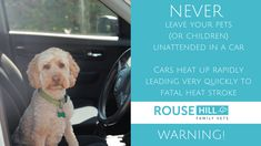 NEVER leave pets (or children) unattended in a car