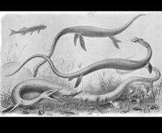 Elasmosaurus  by Joseph Smit (1836-1929)  from Extinct Monsters  1892 England