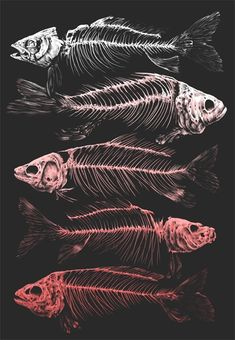 Illustration Fish Dreaming of a fish being cut off, a spine in one place . Fish Anatomy, Anatomy Art, Animal Skeletons, Animal Skulls, Tattoo Oriental, Fish Skeleton, Fish Illustration, Arte Horror, Fish Art