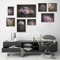 King on Gray - Gallery wall, various sizes by Natascha van Niekerk Fine Art Photography Framed Canvas Prints, Canvas Frame, Canvas Wall Art, Wall Art Prints, Botanical Wall Art, Botanical Prints, Art Prints For Home, Square Art, Flower Photos