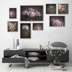 King on Gray - Gallery wall, various sizes by Natascha van Niekerk Fine Art Photography Botanical Wall Art, Botanical Prints, Framed Canvas Prints, Wall Art Prints, Art Mural Photo, Art Prints For Home, Square Art, Flower Photos, Fine Art Paper