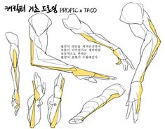 Discover recipes, home ideas, style inspiration and other ideas to try. Arm Anatomy, Anatomy Poses, Body Anatomy, Anatomy Study, Anatomy Art, Anatomy Drawing, Human Anatomy, Reference Manga, Drawing Reference Poses