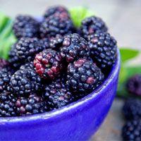 HMR Shake: Blackberry Cheesecake Smoothie