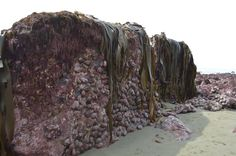 """""""The whole seabed raised out of the ground #kaikoura #eqnz #earthquakenz"""""""