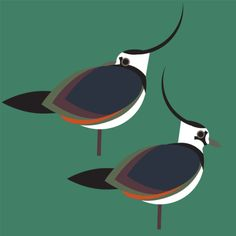 Aves Acuáticas Vintage