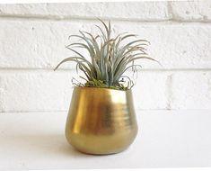 Mixed metallics air plant succulent gift gold bud vase