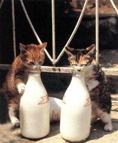 猫たちの立ち飲み風景   A!@attrip