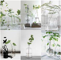 Sehr pur: Blattgruen in Vasen