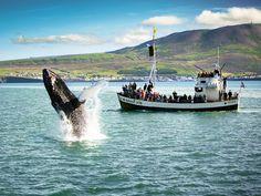Whale Watching Tour - Husavik - Extreme Iceland