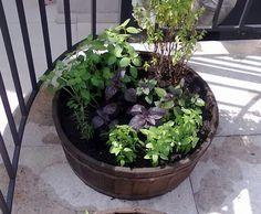 #horta rústica em tina de madeira