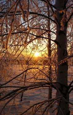 Winter Sun by ~Anna-Belash on deviantART