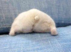 超絶プリティ♡見ているだけでほっこりするハムケツの魅力に迫る!【30枚】 - ペット日和 Beautiful Creatures, Animals Beautiful, Animals And Pets, Funny Animals, Cute Dogs, Cute Babies, Syrian Hamster, Mini Pigs, Cute Hamsters