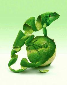 .lime lizard