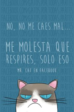 it just bothers me that you breath, that's it Best Quotes, Funny Quotes, Spanish Memes, More Than Words, Grumpy Cat, Happy Thoughts, I Love Cats, Manga, Funny Images