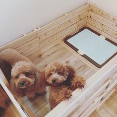 Dog Crate Furniture, Crates, Dog Lovers, Puppies, Pets, Babies, Instagram, Rabbit, Dog