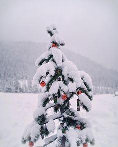 Image Via: Macadameia Winter Wonderland Christmas, Little Christmas, Winter Christmas, Xmas, Country Christmas, Jingle All The Way, Outdoor Christmas Decorations, Merry And Bright, Tis The Season