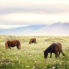 Post By Sean Ensch  E2 80 A Am Utc Horse Backgroundranch