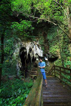 spiral cave entrance to the rio camuy cave system, parque de las cavernas del rio camuy, municipio de hatillo, puerto rico 1 by Alan Cressler