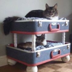 """From """"Dusty Old Thing"""" on Facebook. Great idea for old luggage."""