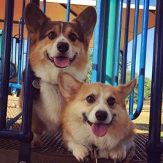 Besides my own timid and precious Corgi, Ralph and George are my favorite guys ever!