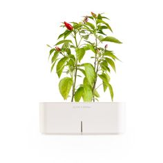 Click & Grow Automated Planter Pots = $65. 'Cause, plastic plant pots are too mainstream.