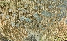 Human Skin Texture, Reptile Skin, Open Weave, Animals Images, Photoshop, Zoo, Patterns, Quilting, Boards