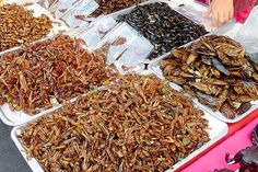 Fried bugs for lunch, I will try one and there will be photographic evidence of it.
