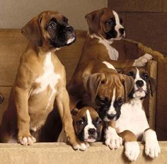 What the pups I took pictures of will look like in a couple weeks.