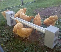 Chicken Coop - - DIY Cinder Block Chicken Feeder - super easy to setup and cheap too. Building a chicken coop does not have to be tricky nor does it have to set you back a ton of scratch. Chicken Garden, Backyard Chicken Coops, Chickens Backyard, Chicken Coop Pallets, Diy Chicken Coop Plans, Chicken Tractors, Water Feeder For Chickens, Chicken Roost, Chicken Coop Decor