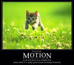 Cat Law of Motion