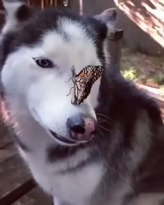 And Now A Dog And Butterfly - Lustiges tier - animals Cute Animal Videos, Funny Animal Pictures, Cute Funny Animals, Cute Baby Animals, Cute Cats, Funny Dog Videos, Funny Dogs, Tier Fotos, Cute Creatures