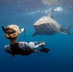 Shark S, Shark Week, Sea Explorer, Shark Pictures, Wild Creatures, Deep Sea, Deep Blue, Underwater Photography, Ocean Life