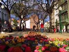Flower Festival.... Portugal
