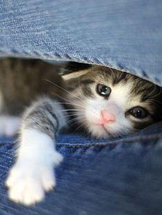 #Animal #Kitten #Cat #Cute #Photography