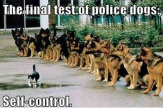 The Final Test For Police Dogs - Dog humor #policetest #policeexam #policehumor