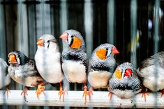 Top 10 Tiny, Cute Colourful birds and their sounds