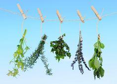 As diversas utilizações das ervas